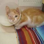 Una gata sobreviviente