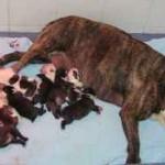El parto de la perra