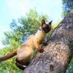 Un gato en el árbol