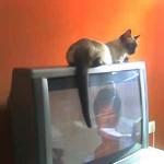 Los sitios preferidos del gato