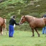 Domando caballos al natural