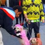 Perros de color rosa