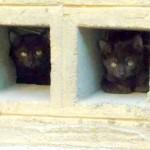 Dos gatos muy cautos