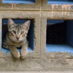 Gato asomado con cautela