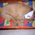 Penélope durmiendo