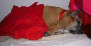 Penélope durmiendo en su cama