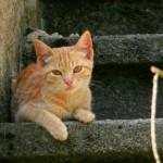 Riesgos de la sociabilidad entre perros y gatos