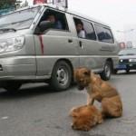 Amistad y fidelidad entre animales