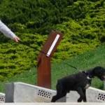¿Tu perro es el líder, o eres tú? ¿Quién manda?