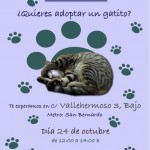 Adopta un gato con Madrid Felina