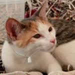 Salón para la Adopción de Animales de Compañía