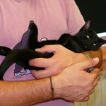 Adopción de gatos en Madrid Felina