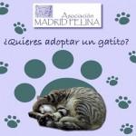 Otro día de adopción de gatos en Madrid Felina