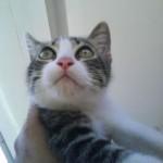 Ron, mi gato, mi amigo