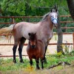 Un par de caballos curiosos