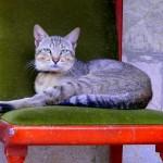 El último gato en París