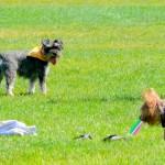 Pasear al perro y hacer ejercicio