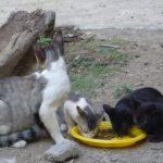 Los gatos de Madrid Felina necesitan tu ayuda