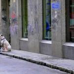 Diario de un perro abandonado
