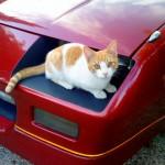 Merlín, el gato misterioso