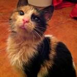 La gata Maga y la fuerza de la vida