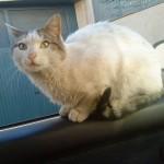 El gato Mimo y su baño de aceite de auto
