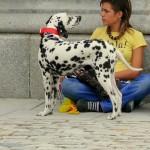 Por qué los perros viven menos que los humanos