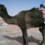 Niña subiendo a un enorme camello