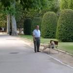 Un perro descansando en el banco