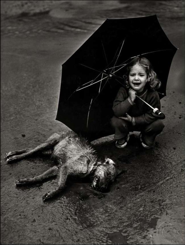 nena con paraguas llorando junto a un perro muerto