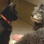 Diferencias del gato frente al perro